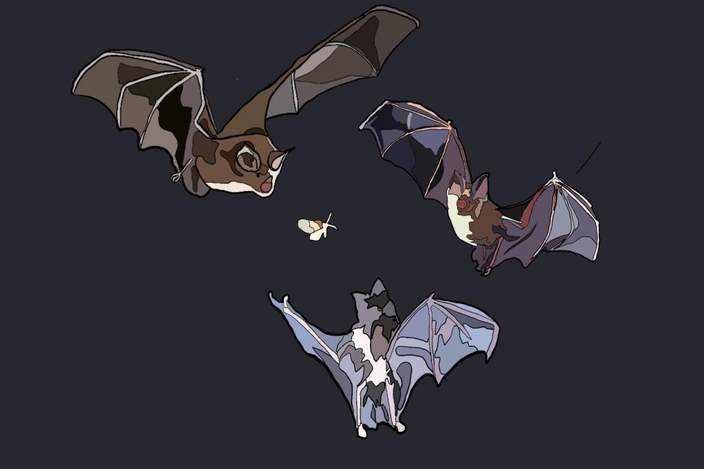 Illustration of three bats circling a moth, by Hannah