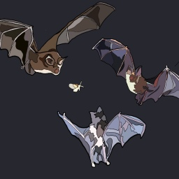 In Defence of Bats