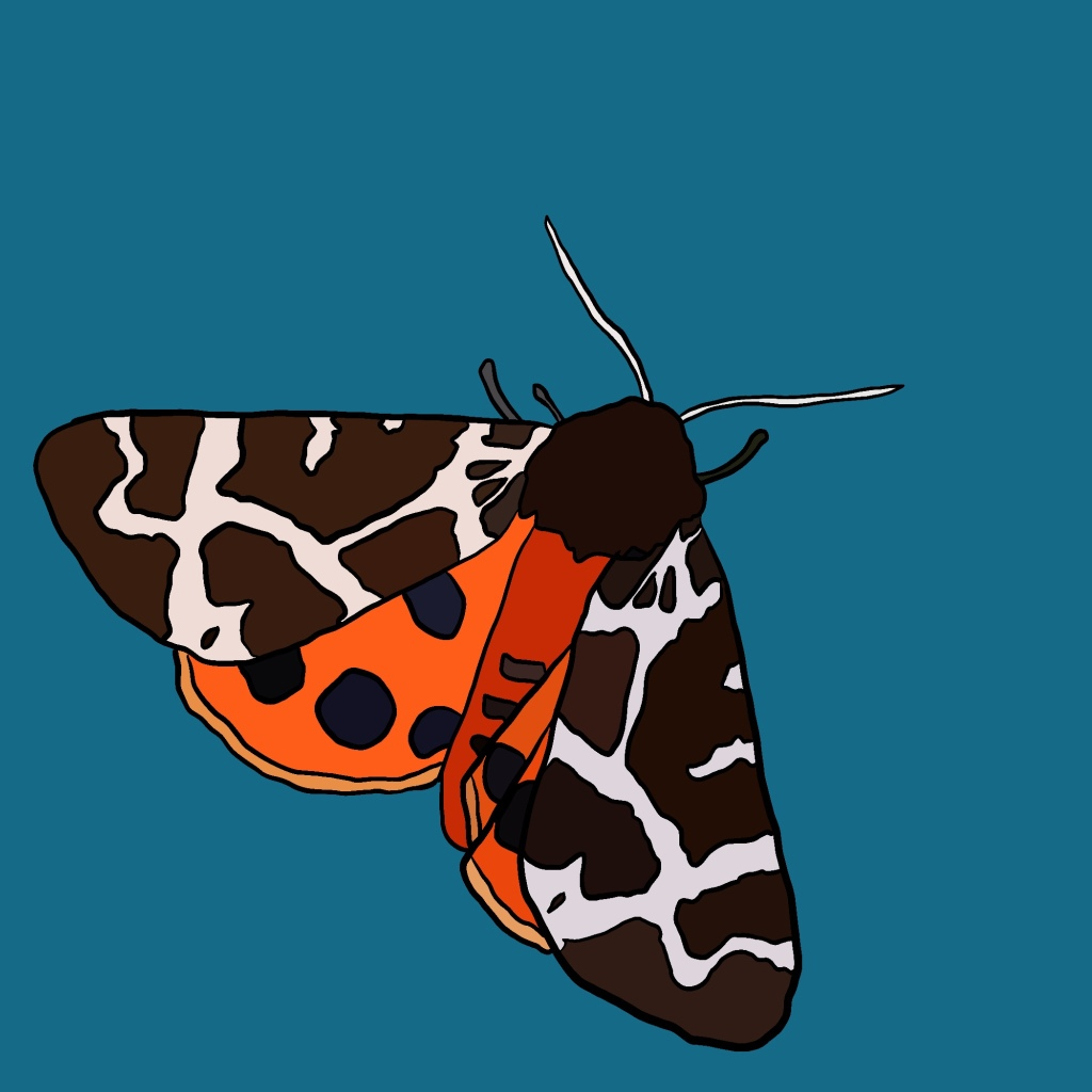 Illustration of a moth by Hannah