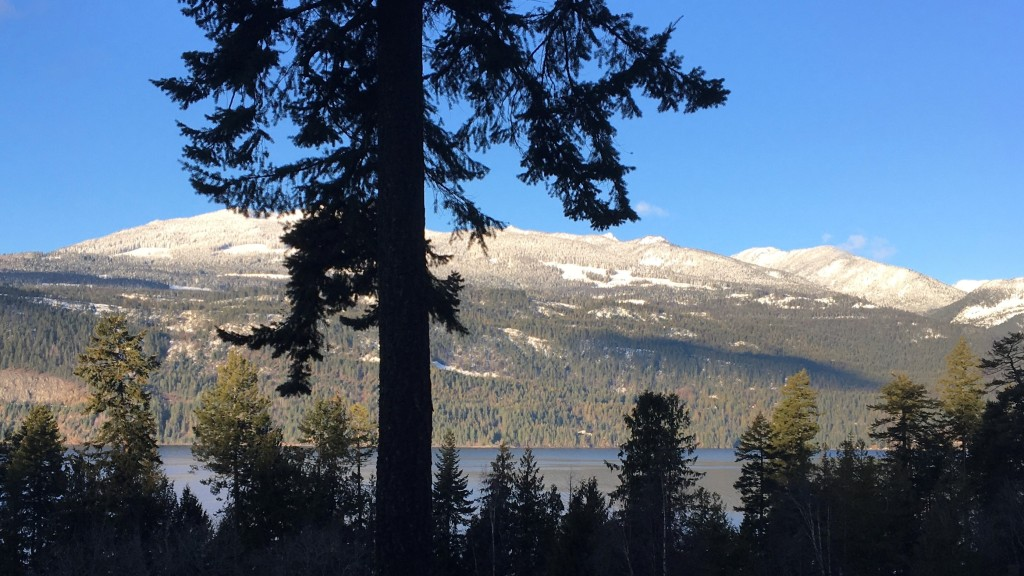 The silhouette of a tree against a sunlit lake and snow-capped mountains.